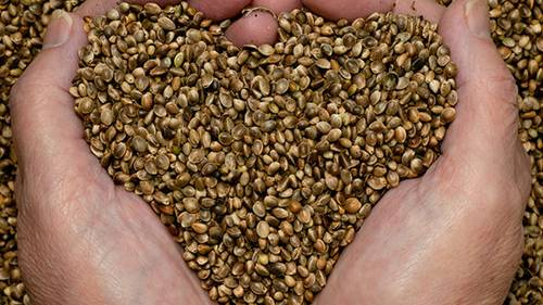 Hemp Seed Approval Has One More Hurdle